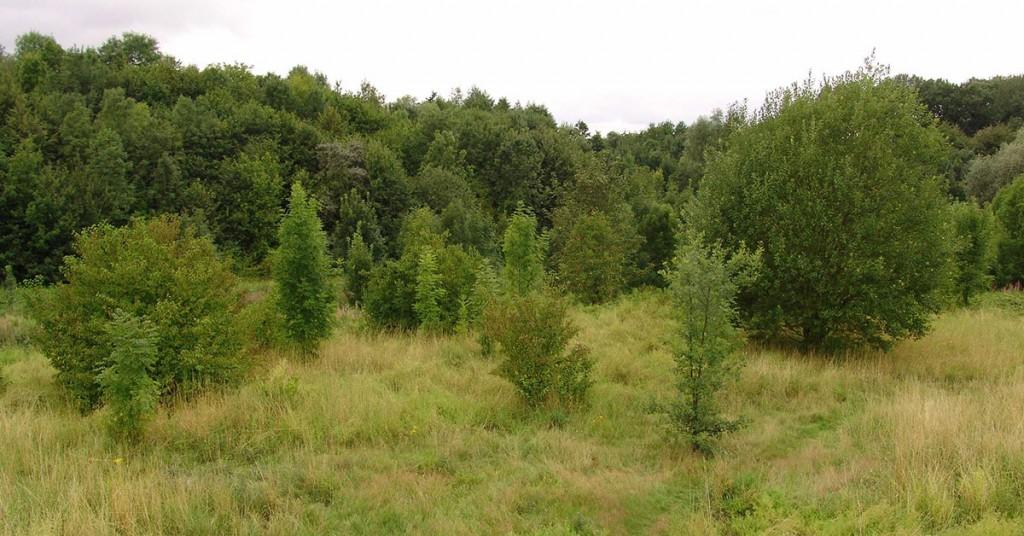 Ein Mix aus Wald und offene Flächen. Foto: Wildnis für Kinder