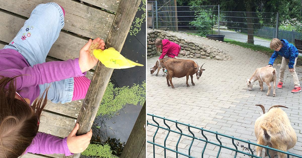 Ziegen und Vögel füttern