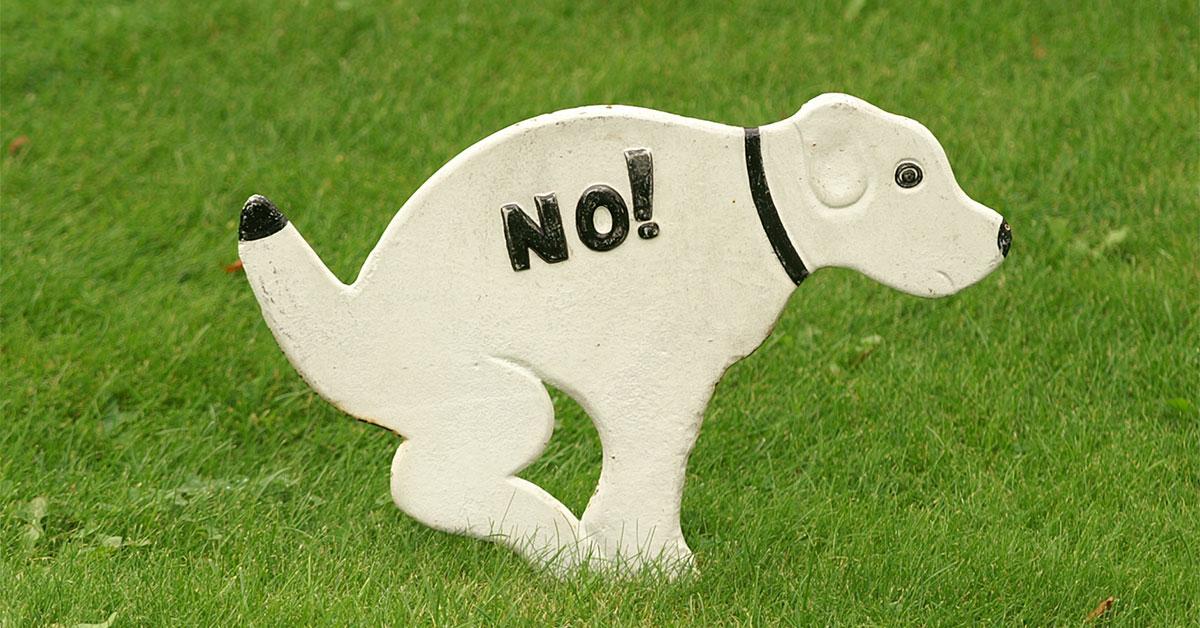Zu oft kacken Hunde dorthin, wo sie nicht sollen
