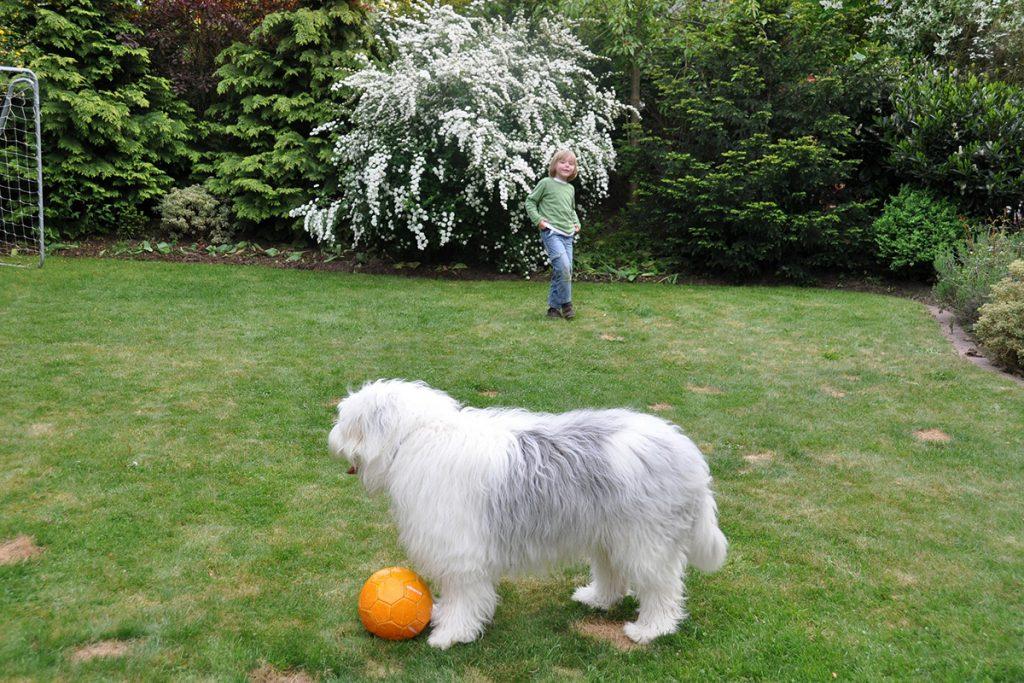 Junge und Hund im Garten